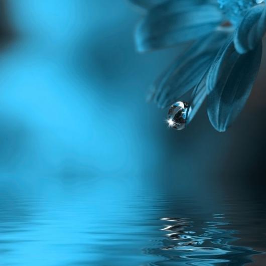 Как лечиться цветочной водой