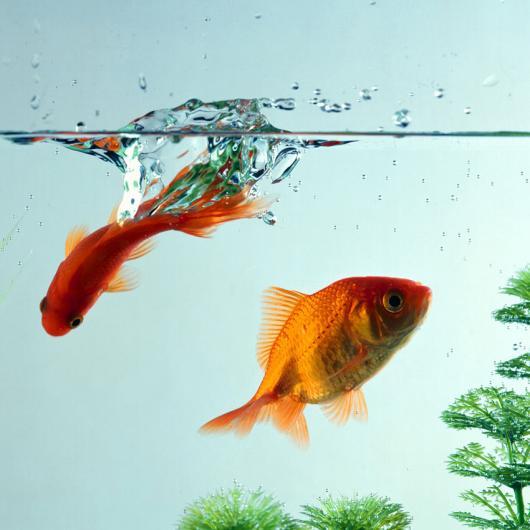 Какая вода для аквариума лучше?