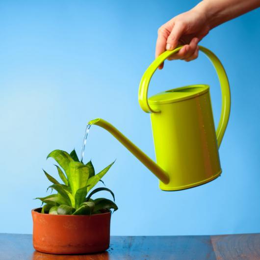 Вода для комнатных растений и цветов